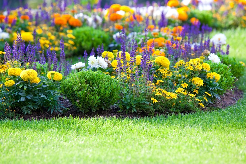 Flower bed and green grass