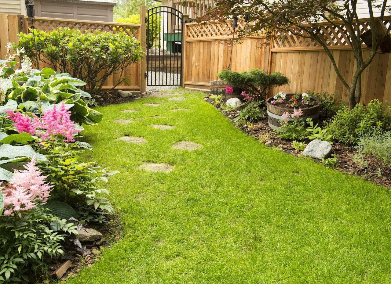 Residential landscaping in backyard